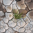 Green grass growing on cracked earth - Stock Photo