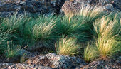 Rock and grass — Stock Photo