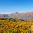 Fall colors woods in the Smoky Mountains National Park — Stock Photo