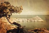 Retro style photo juniper tree on rocky coast of Black sea — Stock Photo