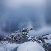Snow storm at Demerdzhi mountain — Stock Photo