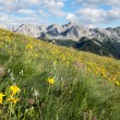 Alpine meadows — Stock Photo #30387479