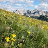 Alpine meadows — Stock Photo