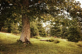 Vintage style photo of green summer tree — Stock Photo