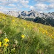 Alpine meadows — Stock Photo #32545539
