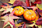 Halloween pumkin on colorful autumn leaves — Stock Photo