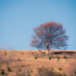 Lonely tree at the autumn mountain hill — Stock Photo #37644263