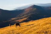 Horses on the sunny mountain hill — Stock Photo