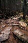 Dark old forest — Stock Photo