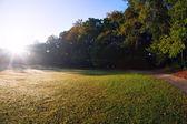Beautiful park morning view — Zdjęcie stockowe