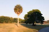 Beautiful park summer view — Stock Photo