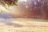 Beautiful park morning view — 图库照片