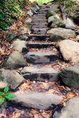 каменный путь в лес — Стоковое фото