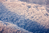 Carpathian mountains frozen hills — Stock Photo