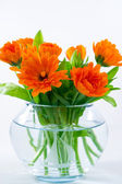 Marigold in round vase — Stock Photo