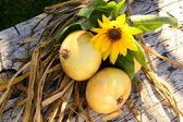 Fresh onions — Stock Photo