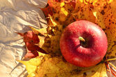 Apple and autumn leaves — Stock Photo