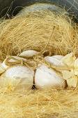 Easter egg nest... — Stock Photo