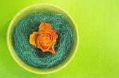 Orange rose in a green bowl — Foto de Stock