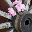 Roses and wagon wheel — Stock Photo