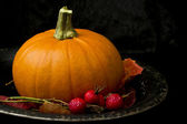 Pumpkin still life — Stock Photo