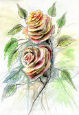 Roses. — Stock Photo