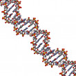 DNA structure, B-DNA form. — Stock Photo