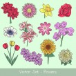 Flowers vector set — Stock Vector