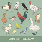 Farm Birds Vector Set — Stock Vector