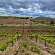 Vineyards of Temecula in North County San Diego — Stock Photo