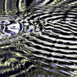 ������, ������: Concentric Abstraction