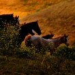 Horse crossing at dusk - Stockfoto