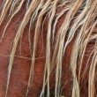 Brown mane background - Stockfoto
