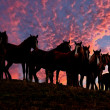 American wild mustang horses - Stockfoto
