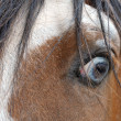 The eye of a wild mustang horse — Stock Photo