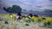 American wild mustang horses — Stock Photo