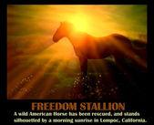 Frihet hingst — Stockfoto