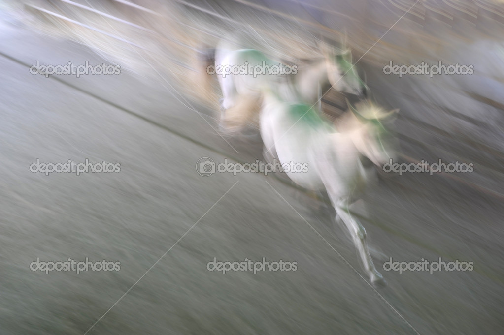 Two white horse in a purposefully timed exposure. Blurred effect of motion, power, and beauty. — Stock Photo #14074526
