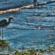 A lone heron standing on the beach. — Stock Photo