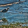 A lone heron standing on the beach. — Stock Photo #19057389