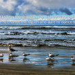 Group of seagulls on the beach — Foto Stock
