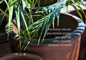 Green plant in flowerpot — Stock Photo