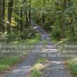 caminho pela floresta com citação — Foto Stock
