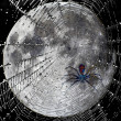Spider web over moon — Stock Photo
