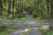 Path through the forest with quote — Stock Photo