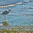 Heron on beach — Stock Photo #40137231