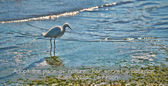 Heron on beach — Stock Photo