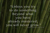 Stalks of hardwood bamboo with quote — Stock Photo