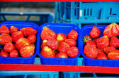Row of blue baskets with strawberries — Stock Photo