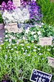 Květinářství s modrou a fialovou rostliny — Stock fotografie
